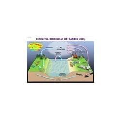 Circuitul dioxidului de carbon in natura.
