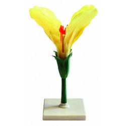 Floare de soia