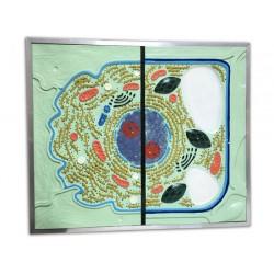 Celula (basorelief)