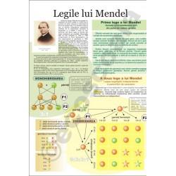 Legile lui Mendel