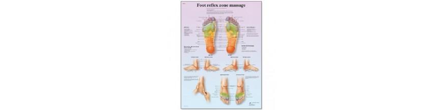 Planse acupunctura si masaj